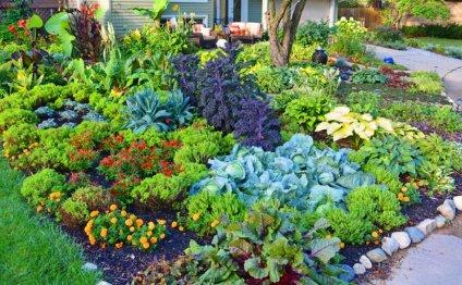 Дом сад огород видео